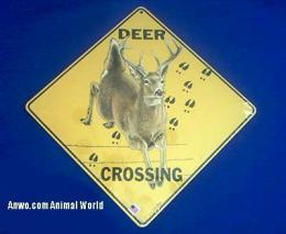 deer crossing sign jumping