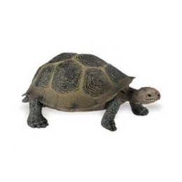 desert tortoise turtle toy miniature