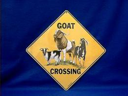 goat crossing sign color