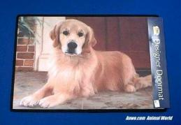 golden retriever doormat usa