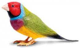 gouldian-finch-toy-miniature-replica.jpg