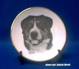 greater swiss mountain dog plate porelain