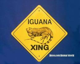iguana crossing sign