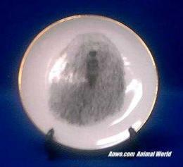 komondor plate porcelain