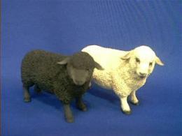 lambfigcc.JPG