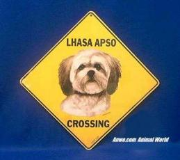 lhasa apso crossing sign color
