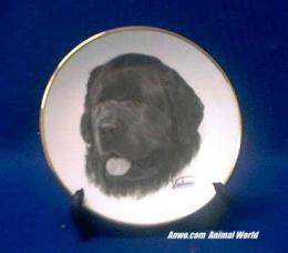 newfoundland plate porcelain