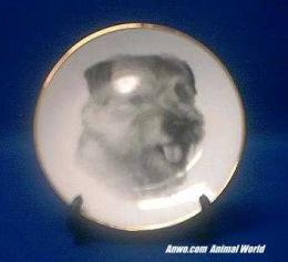 norfolk terrier plate porcelain