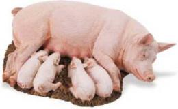 pig toy sow with piglets