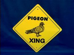pigeon crossing sign