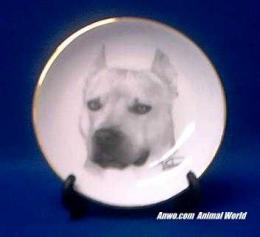 pit bull plate porcelain staffordshire