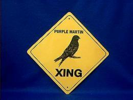 purple_martin_crossing.JPG