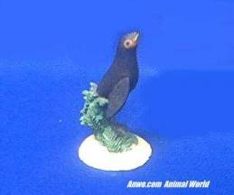 sea lion figurine wyland small