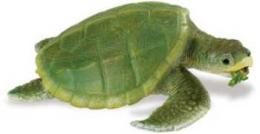 kemps ridley sea turtle toy
