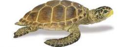 loggerhead sea turtle toy
