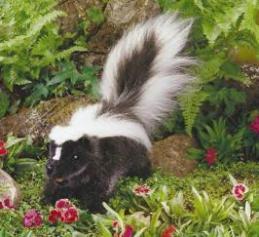 skunk puppet
