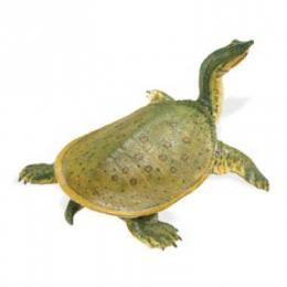 soft shell turtle toy miniature