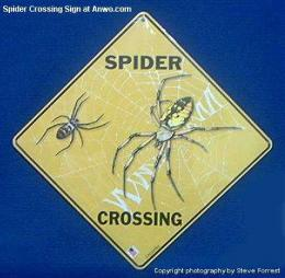 spider-crossing-sign-tarantula.JPG