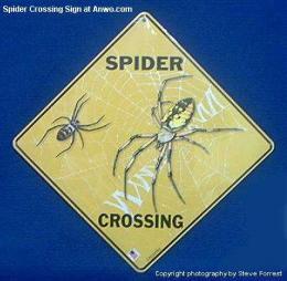spider-crossing-sign-tarantula.JPG