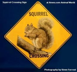 squirrel crossing sign outdoor