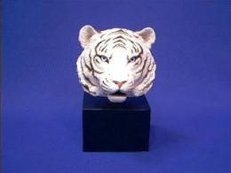 white tiger sandicast faces of nature figurine with base