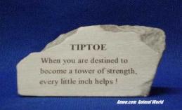 tiptoe herd stone