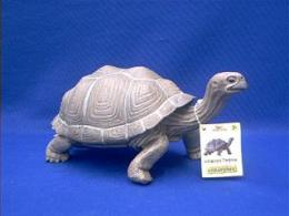 galapagos turtle toy